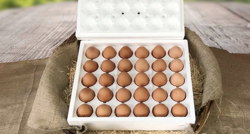 Organik Gezen Tavuk Yumurtası